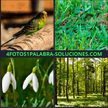 4 Fotos 1 Palabra - Pájaro amarillo y verde, césped, hierba, flores blancas, bosque, árboles, periquito que estabas buscando