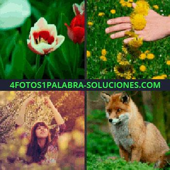 4 Fotos 1 Palabra - Tulipán, mujer con los brazos levantados, mano con flores amarillas, zorro flores