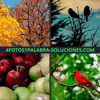 4 Fotos 1 Palabra - Árboles con hojas amarillas y anaranjadas, silueta de dos pájaros en una rama, manzanas rojas y verdes, manzanas pajaro rojo