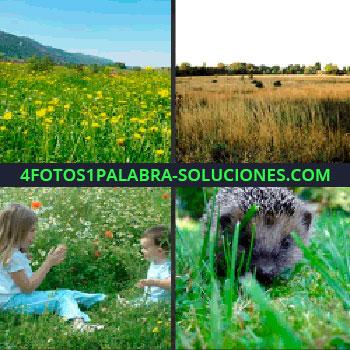 4 Fotos 1 Palabra - Campo con flores amarillas, paisaje con plantas secas, niña y bebé sentados en la hierba, erizo niños