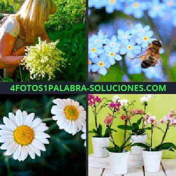 4 Fotos 1 Palabra - Flores azules, mujer recogiendo flores, margaritas, flores blancas, orquídeas, macetas, macetas abeja