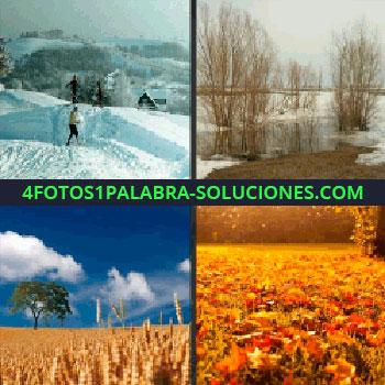 4 Fotos 1 Palabra - Suelo lleno de hojas secas, paisaje con nieve, árboles sin hojas, trigo, árbol, nieve trigo