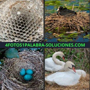 4 Fotos 1 Palabra - Cisnes en un nido, pato negro en nido sobre el agua, panal, huevos azules
