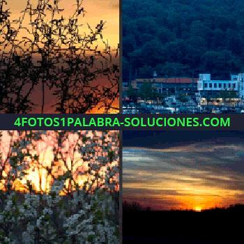 4 Fotos 1 Palabra - Cielo anaranjado, ciudad junto al mar, puerto, flores blancas, atardecer