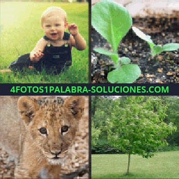 4 Fotos 1 Palabra - Cachorro de león, brotes verdes, árbol, bebe sobre la hierba