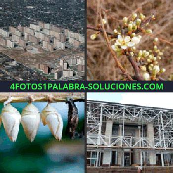 4 Fotos 1 Palabra - Rama con flores blancas, capullos, fachada de un edificio, ciudad, edificios