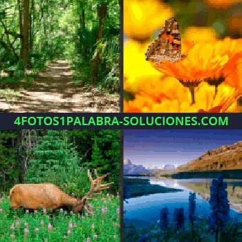 4 Fotos 1 Palabra - ciervo mariposa, paisaje con lago, camino por el bosque, sendero, ciervo mariposa
