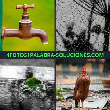 4 Fotos 1 Palabra - Telaraña llena de gotas de agua, grifo, gallo, charco con algo verde, grifo telaraña