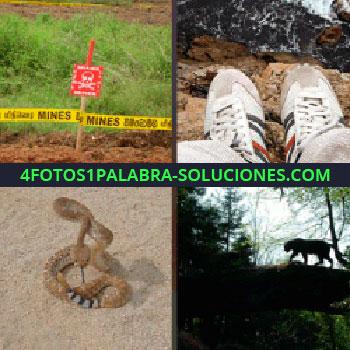 4 Fotos 1 Palabra - minas serpiente prohibido pasar. Zapatillas precipicio. Serpiente. Silueta tigre salvaje