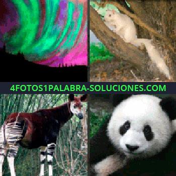 4 Fotos 1 Palabra - oso panda, aurora boreal, cebra con marrón, caballo, ardilla blanca