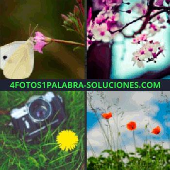 4 Fotos 1 Palabra - mariposa, butterfly, cámara en el pasto, amapolas, arbol sakura