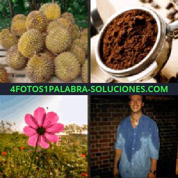 4 Fotos 1 Palabra - durians, frutas, cacao, polvo negro, flor, hombre transpirado