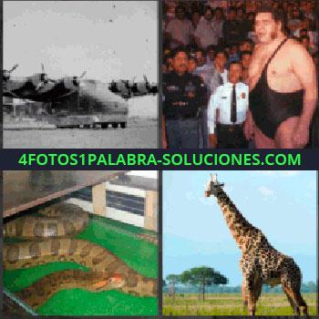 4 Fotos 1 Palabra - avion carguero, Hombre grande de lucha, Serpiente, Jirafa de