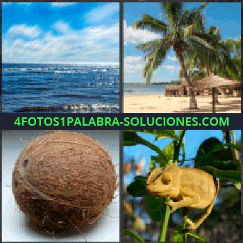4 Fotos 1 Palabra - mar, Playa con palmeras y sombrilla, Coco, Iguana, Lagarto