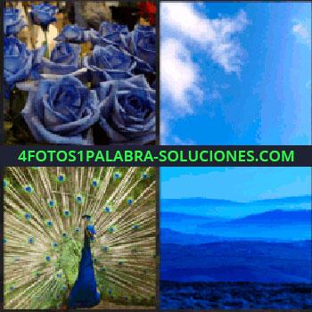 4 Fotos 1 Palabra - Rosas azules, cielo con nubes, paisaje de diferentes tonos de azul, pavo real