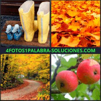 4 Fotos 1 Palabra - botas de agua. Hojas en el suelo. Camino en el bosque. Manzanas