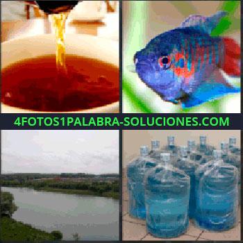 4 Fotos 1 Palabra - Taza de te. pez azul. Lago. Garrafas o garrafones de agua