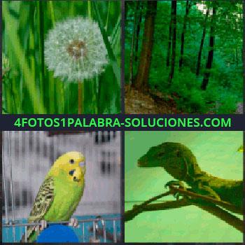 4 Fotos 1 Palabra - diente de león. Bosque. Pájaro canario. Iguana o lagarto