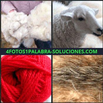4 Fotos 1 Palabra - Pelo blanco. Oveja. ovillo de hilo o tela. Pelo marrón