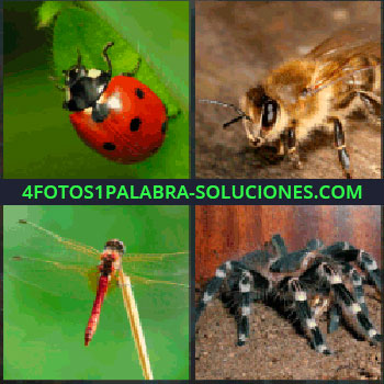 4 Fotos 1 Palabra - Mariquita. Abeja. Libélula. araña tarántula