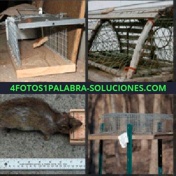4 Fotos 1 Palabra - jaula para animales. Jaula de madera. Rata atrapada. Jaula en el bosque