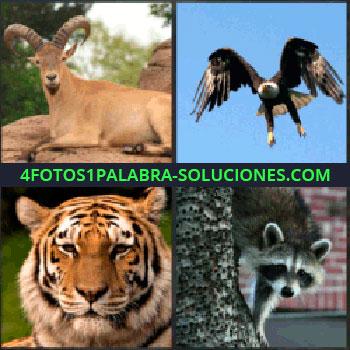 4 Fotos 1 Palabra - ciervo o antílope. Aguila o ave. Tigre. Zorro