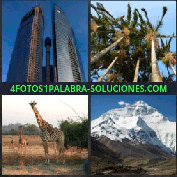 4 Fotos 1 Palabra - rascacielos o edificio. Palmeras. Jirafa. Montaña nevada