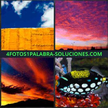 4 Fotos 1 Palabra - Cielo azul y muro marrón. cielo rojizo atardecer. Nubes anaranjadas de la puesta de sol. Pez de muchos colores