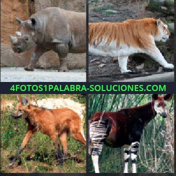 4 Fotos 1 Palabra - Rinoceronte. Tigre. Zorro. Especie de llama o cervatillo