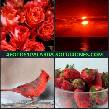 4 Fotos 1 Palabra - Rosas. Amanecer o atardecer. Pájaro rojo. fresas