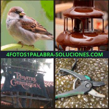 4 Fotos 1 Palabra - Pájaro sobre una rama, tijeras de podar, barco pirata, vela negra de Piratas del Caribe, fuente de chocolate.