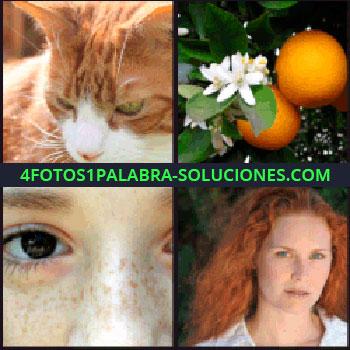 4 Fotos 1 Palabra - Gato anaranjado, cara con pecas, mujer pelirroja, naranjas