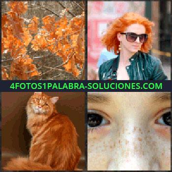 4 Fotos 1 Palabra - Hojas árbol. pelirroja. Gato. Niño con pecas