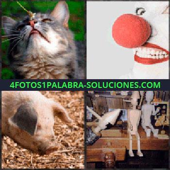 4 Fotos 1 Palabra - Gato. payaso. Cerdo. Pinocho