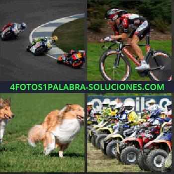 4 Fotos 1 Palabra - Motos competición. Ciclista. Perros corriendo. Carrera de cuatrimotos o quads