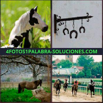 4 Fotos 1 Palabra - Caballo blanco y negro, caballo en el campo, herraduras colgadas, carrera de caballos