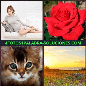 4 Fotos 1 Palabra - Señorita en el sofa. rosa roja. Gatito. Amanecer o atardecer en el campo