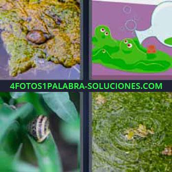 4 Fotos 1 Palabra - seis-letras caracol. Dibujo de pringue verde. Babosa o caracola. Charca o fango verde.