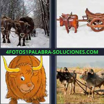 4 Fotos 1 Palabra - ocho-letras bisonte o búfalo. Vacas o toros tirando de carro. Animales de tiro arando.