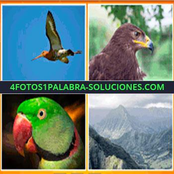 4 Fotos 1 Palabra - ave volando, perico, periquillo, cotorra, halcón, montañas