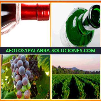 4 Fotos 1 Palabra - vino, botella de vino, uvas, viñedo