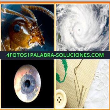 4 Fotos 1 Palabra - Huracán, Insecto, globo ocular, botón y aguja