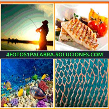 4 Fotos 1 Palabra - hombre pescando, salmón, red, coral marino