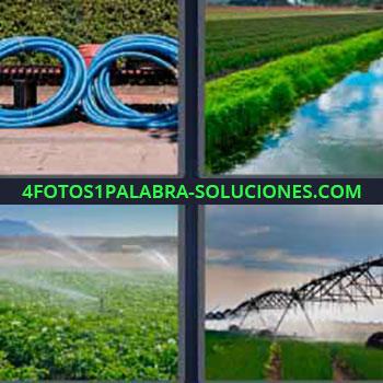 4 Fotos 1 Palabra - seis-letras cultivos. Mangueras azules. Agricultura. Cultivos inundados. Aspersores regando los campos.
