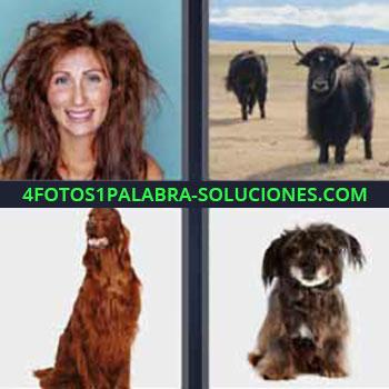 4 Fotos 1 Palabra - mujer despeinada. Búfalo, bisonte o toro. Perro pelo largo. Cachorro.