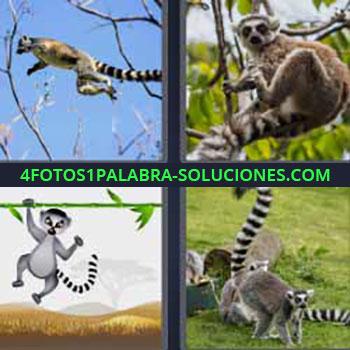 4 Fotos 1 Palabra - mono árbol. Primate con cola de rayas. Dibujo animal. Jugando en la hierba.