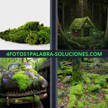 4 Fotos 1 Palabra - siete-letras bosque verde. Vegetación. Casita llena de moho. Coche viejo en medio de la jungla. Árbol hierba.