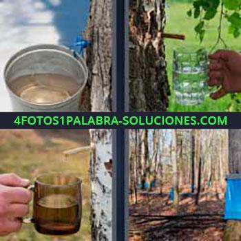4 Fotos 1 Palabra - seis-letras corteza de arbol jugo. Cubo en un árbol. Sacando jugo o esencia de la corteza de los árboles.