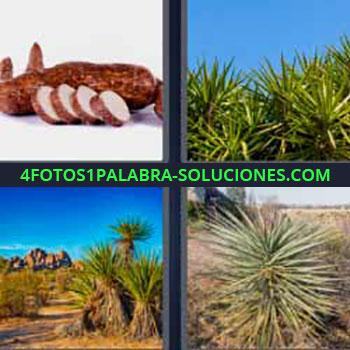 4 Fotos 1 Palabra - cuatro-letras mandioca. Palma. Terreno desértico con pequeñas palmeras.