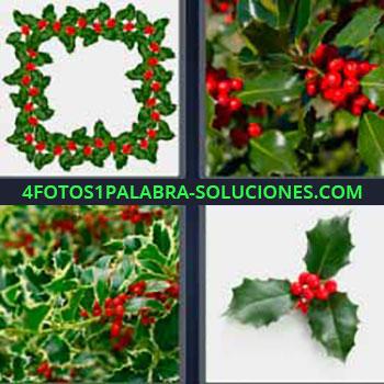 4 Fotos 1 Palabra - seis-letras hojas verdes y bayas rojas. Planta de adorno navideña.